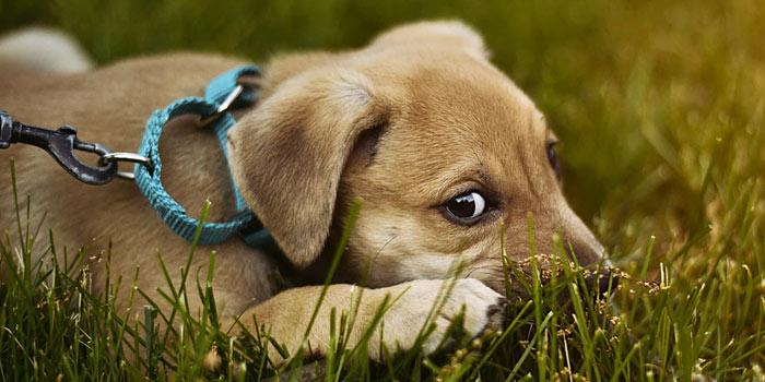 new puppy leash