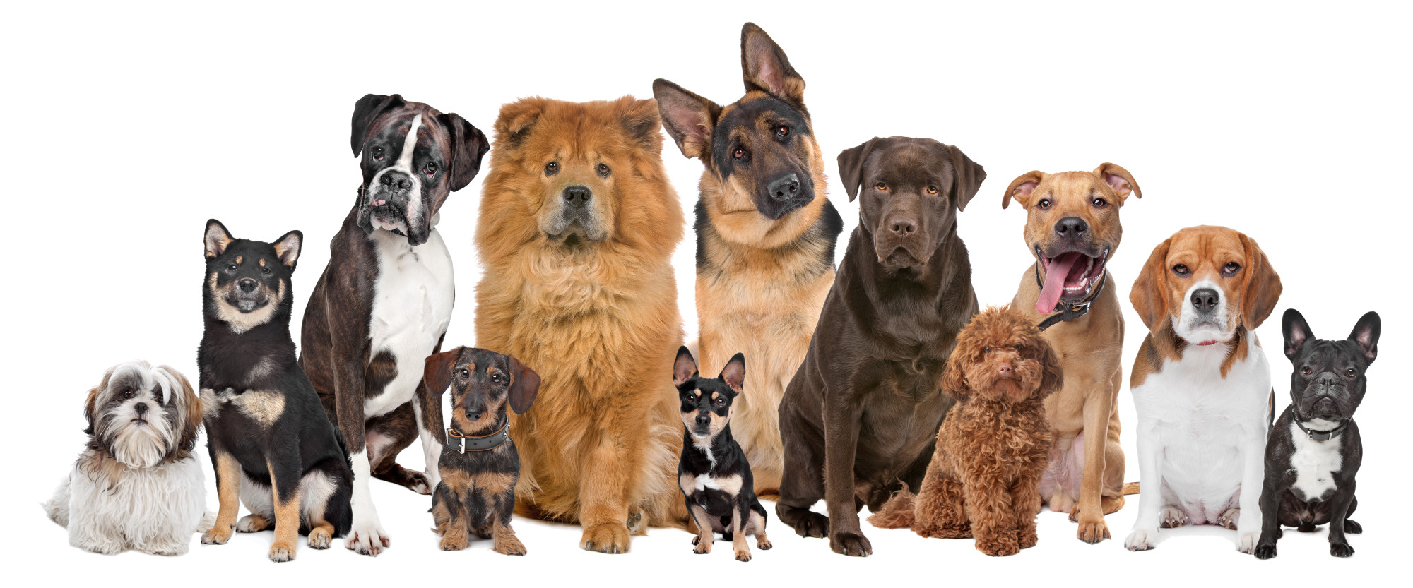 Fur Babies Out of Control! Here's How to Manage Multiple Dogs ...