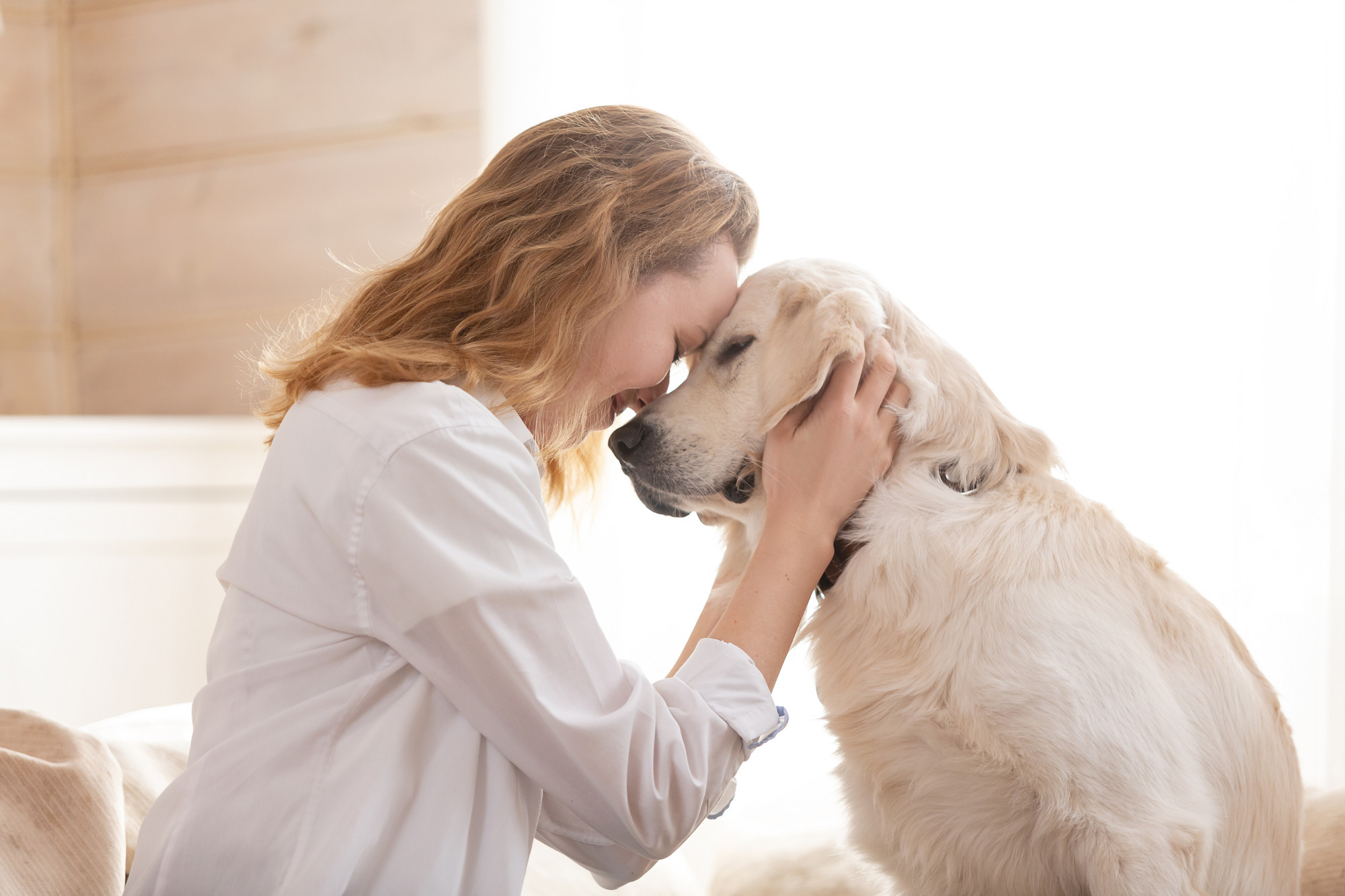 Comforting Canines: How to Certify a Therapy Dog | CelebrityDogWatcher.com